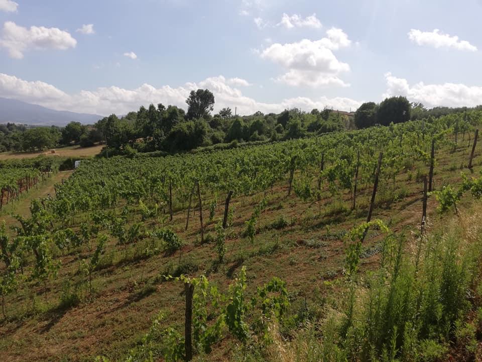 Gallery vinicola schiavella for Domus arredamenti olevano romano