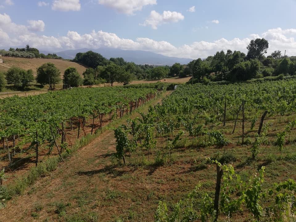 Le nostre vigne vinicola schiavella for Domus arredamenti olevano romano